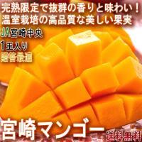 ◆国内有数の高品質なマンゴー産地、宮崎県!  宮崎県は県をあげて盛んにマンゴーの育成や栽培方法の研究...