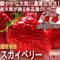 スカイベリー 大粒いちご 約600g 栃木県産 贈答品 JA共撰品 ジューシーな果肉に濃厚な味の苺!ギフト最適な栃木で生まれた新品種