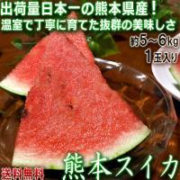 スイカ 熊本産 5~6kg 1玉入り すいか ハウス栽培 西瓜の生産量日本一の熊本産!温室で丁寧に育てた抜群の味