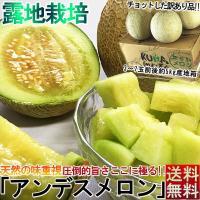 送料無料 人気の青肉タップリ5kg   熊本県はメロンの生産量が国内第2位で、その中でもJA熊本は様...