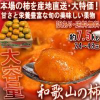 産地直送 和歌山の柿 約7.5kg 和歌山県産 訳あり品 JA共撰品 季節ごとに旬の品種を厳選!本場で育てた抜群の美味しさ
