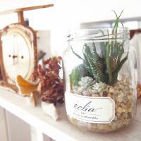 エクリア  小瓶 造花 観葉植物 サボテン 消臭グリーン