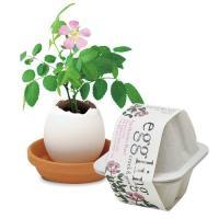 聖新陶芸 エッグリング エコフレンドリー ミニバラ 植物 グリーン 栽培セット ガーデニング プチプラ ギフト 景品 プレゼント