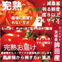 農家直送だから美味しい!新鮮! 茨城県鉾田産 糖度8以上の絶品ミニトマト 2kg  ミニトマト名産地...