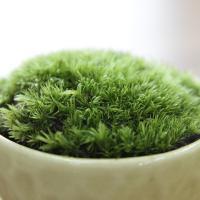 ●簡単・手軽に苔を楽しめる培養キットです。 ●苔には「消臭効果」「湿度調節」「蒸散作用」があります。...