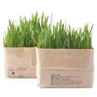 土のかわりに再生粉砕パルプを使用した猫草栽培セットです。 土のかわりに再生粉砕パルプを使用した猫草栽...