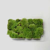 盆栽用:山苔 パック入り