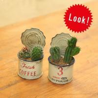 観葉植物:ミニサボテン寄せ植え*COFFEE・NO.3 2個セット :f4093:遊恵盆栽 Yahoo!店 - 通販 - Yahoo!ショッピング