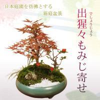 寄せ植え:出猩々もみじ寄せ盆栽 *秋 縁起 鉢植え紅葉狩り