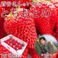 完熟 とちおとめ 18粒入 いちご お祝い 贈答用 ギフト いちごっ子 茨城県産 イチゴ 苺