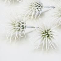 《 造花 グリーン 多肉植物 》Asca/アスカ ティランドシア(ラメ付) (1袋6本入)