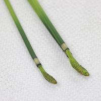 《 造花 グリーン 》Asca/アスカ トクサ(2サイズアソ-ト) グリ-ン
