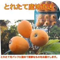 屋久島産びわ 750g 【無肥料 無農薬栽培】おいしくて安心安全