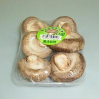 主に山口県産、福岡県産、大分県産を主とする西日本産 椎茸です。