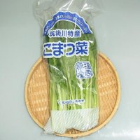 主に山口県産、福岡県産を主とする西日本産 小松菜です。