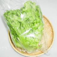 主に山口県産、福岡県産を主とする西日本産 グリーンリーフです。