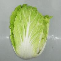 山口県産、福岡県産、熊本県産を主とする西日本産 白菜です。