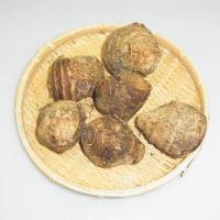主に大分県産、山口県産を主とする西日本産 サトイモです。