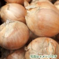 佐賀県産の新玉ねぎ 5kg