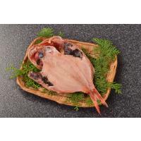 見た目の鮮やかさでも人気の魚です。白身魚ですが脂がとってものっていて、こんがり焼けば皮まで食べられま...