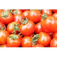 とくちゃんのミニトマト1.5kg(S~Lサイズ)バラ詰