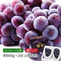上品な香りと柔らかくそして甘くジューシーな果肉の種なし巨峰。 果皮は濃い黒紫色で果肉は透きとおった淡...