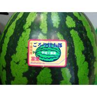 『ごろり甘太郎』です。西瓜の名産地・千葉のブランド西瓜ですよ〜♪ 美味しさバツグン!名前の通り、すわ...