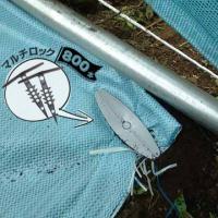 人工芝 固定用 マルチロック 800本 ポリプロピレン製 雑草 遮光 芝生 耐久性 グランド シート グラウンド|yojo