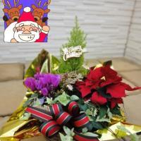【送料無料】クリスマスバスケット(寄せかご)<Br>《ガーデンシクラメンの花色おまかせ》...
