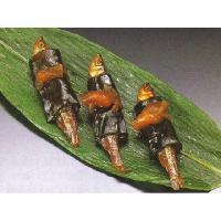●川魚一匹一匹に昆布を巻き、さらに干瓢を巻いた上品な昆布巻きです。 ●一匹当たり40.95円  原 ...