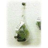 人工観葉植物 アーティフィシャルグリーンアレンジ多肉植物 ガラスポット入り 直径80cm  N10-1227