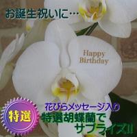 誕生日の花のプレゼントや開店祝い、開業祝い等のお祝いや記念日、個展や楽屋花等の贈り物に、翌日配達の花...