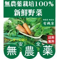 無選別わけあり地場野菜は露地栽培の旬野菜が楽しめます。 ただし見栄えがしない、大きさや形が揃わない、...