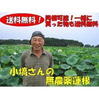 コバナワさんの蓮根 約4kg箱 農薬不使用   【10月~4月中旬ころ】