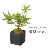 (造花 フェイクグリーン 人工観葉植物) 紅葉盆栽 グリーン(DMFG258)