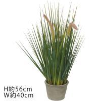 (造花 フェイクグリーン 人工観葉植物) キャットテールグラスポットS グリーン(DMFG284)