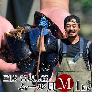 森の栄養分をたっぷり含んだ水が、海底から噴き出す雄勝湾で、太平洋の栄養豊富な海水で育ったムール貝です...