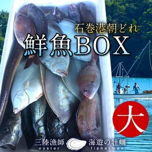 鮮魚BOX 大 宮城県石巻港産 漁師の朝どれ新鮮魚ボックス 料理屋ご用達セット|1123