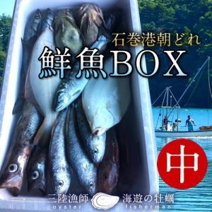 鮮魚BOX 中 宮城県石巻港産 漁師の朝どれ新鮮魚ボックス 料理屋ご用達セット|1123