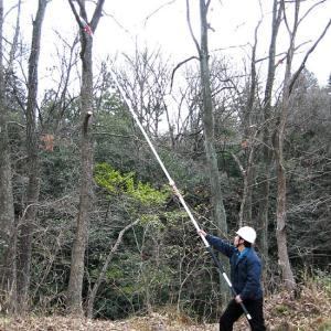 最長6.5mまで伸びるノコギリ 枝打ち一発 N-763|1147kodawaru