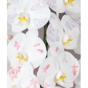【花びらに絵柄や文字をえがけます】 化粧蘭 二本立 90〜100cm|1885