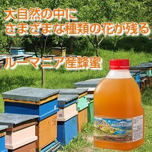新発売!ルーマニア産蜂蜜2kgポリ|38kumate