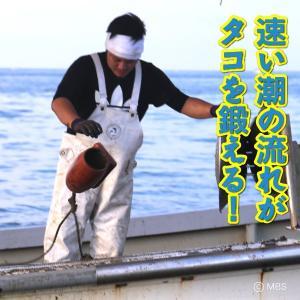 兵庫県 明石市 明石たこ ボイル 1尾(約500g)冷凍|3chokud|02
