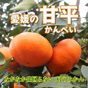 愛媛県 甘平 5kg(4L〜L)|3chokud