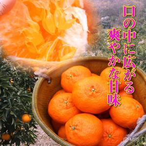 愛媛県 甘平 5kg(4L〜L)|3chokud|02