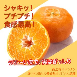 愛媛県 甘平 5kg(4L〜L)|3chokud|03