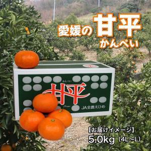愛媛県 甘平 5kg(4L〜L)|3chokud|04
