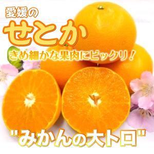 愛媛県 せとか 5kg(4L〜L)|3chokud