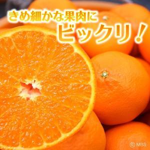 愛媛県 せとか 5kg(4L〜L)|3chokud|02