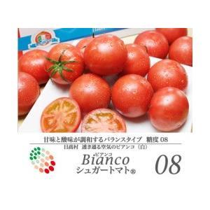 高知県 高糖度フルーツトマト シュガートマトビアンコ糖度8(1kg) 20玉入 約50g/玉|3chokud
